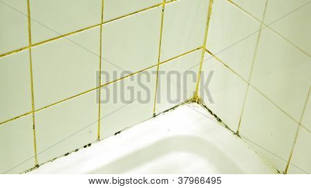 Mold And Dirt In A Shower