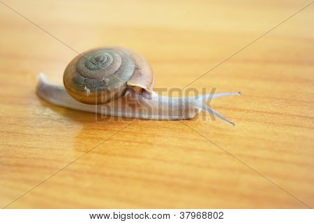 Snail right view