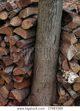 Tree With Firewood