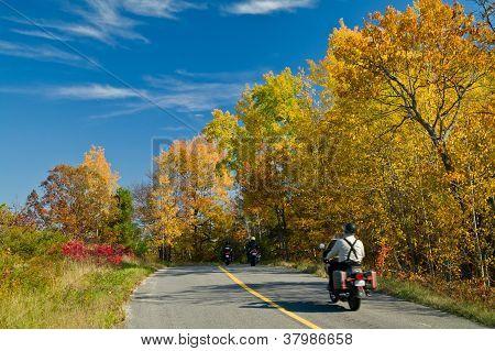 Autumn Bikers