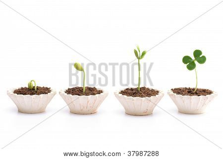 Stages Of The Plant Development