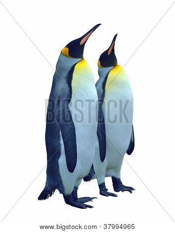 Isolated Two Emperor Penguin With Clipping Path