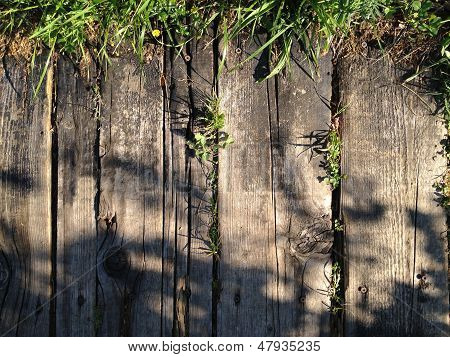 Wood Texture With Grass
