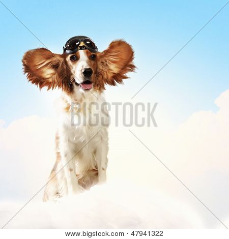 Dog-aviator wearing a helmet pilot. Collage