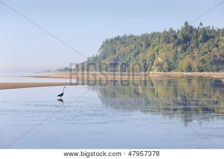 Point Roberts Dawn, Washington State