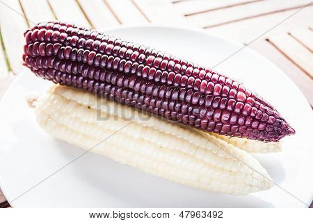 Violet And Yellow Corn Cobs Boiled On The Plate