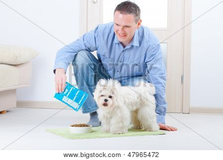 Little dog maltese with his owner feeding him on the floor in home