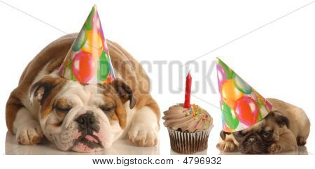Bulldog And Pug With Birthday Hat And Cupcake