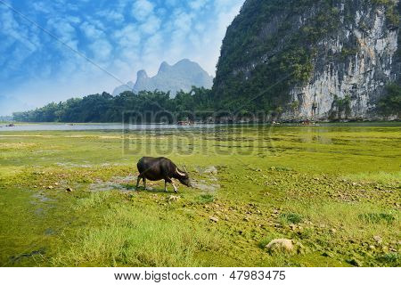 China Guilin landscape raft and buff on grass