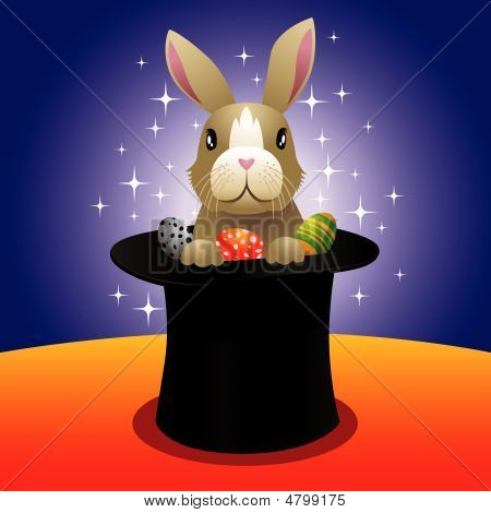 Magic Bunny