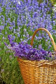 Wicker Basket With Lavender