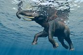 An elephant swims through the water. poster