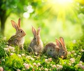 stock photo of eat grass  - Rabbits - JPG