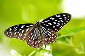 stock photo of cocoon tree  - Images of butterfly perch on green leaf