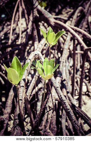 Mangroves In Andaman Beach, India