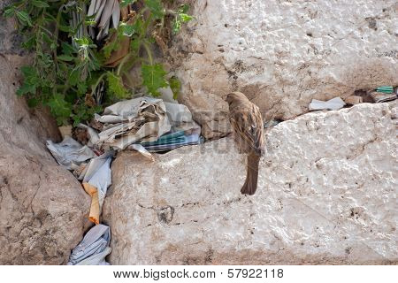 Notes At The Crack Of The Wailing Wall And A Sparrow.