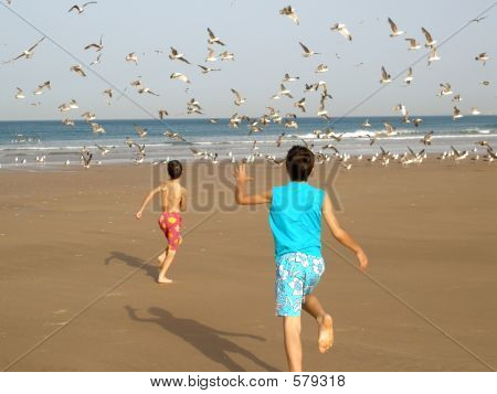 Boys Chasing Birds