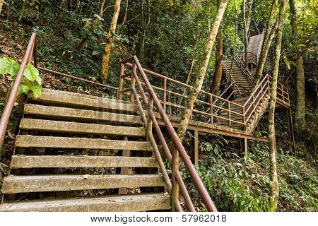 Concrete Staircase In Forest