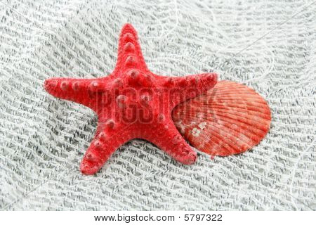 Colored Seashell (starfish And Scallop) On A Fishing Net