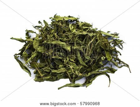 Dried Stevia Rebaudiana Bertoni, Sweet Leaf Sugar Isolated