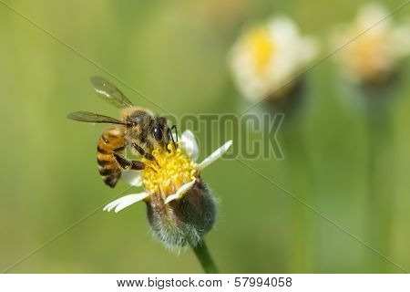 A Bee On A Small Flower