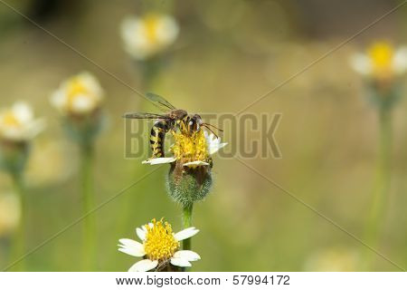 A Wasp On A Small Flower