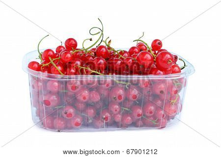 Redcurrant On White