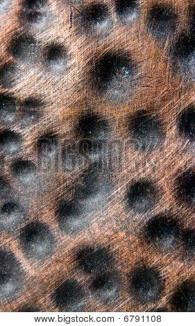 Copper Dot Bumps