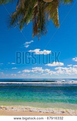 Scene Overhanging Beach