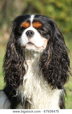 Cavalier King Charles Spaniel In The Garden