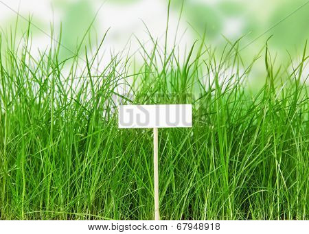 experienced bed of green grass with a blank sign