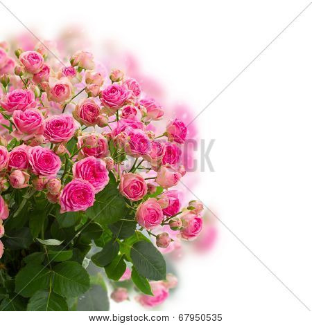 bouqet of fresh pink roses