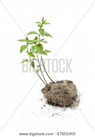 Green plant grow in the soil