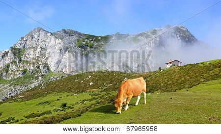 Picturesque Nature Landscape With Cow.