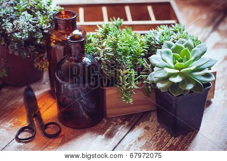 House Plants And Bottles