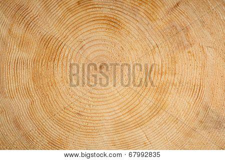 Rings on wooden log