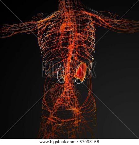 3d render illustration of the male nerves