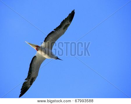 Albatross sea bird
