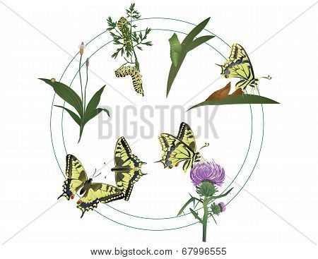 Life of butterfly