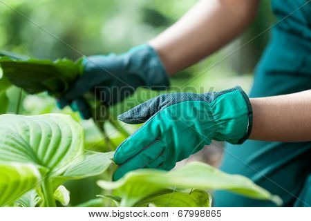 Gardener During Work With Flowers