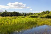 image of wetland  - Wetland in the Finley National Wildlife Refuge Willamette Valley Oregon - JPG