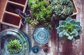 image of plant pot  - House plants green succulents old wooden box and blue vintage glass bottles on a wooden board home gardening and decorating rustic style.