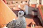 stock photo of cheeky  - fat cheeky seagull on a viewing platform in Tallinn.