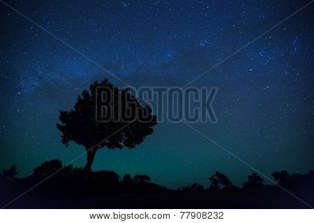 Silhouette of Tree and milky way with star