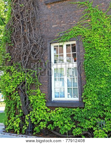 House with green plants