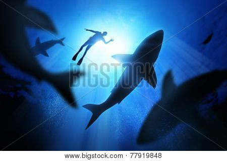 Diver And Great White Sharks