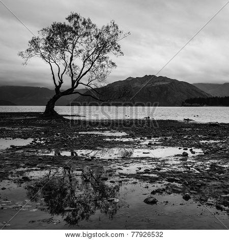 The lonely tree at Lake Wanaka