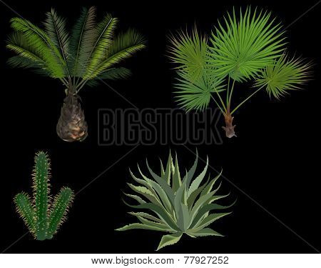 illustration with palm trees and cactus isolated on black background