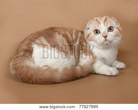 Red And White Striped Scottish Fold Cat Lies On Yellow