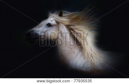 Camargue horse study